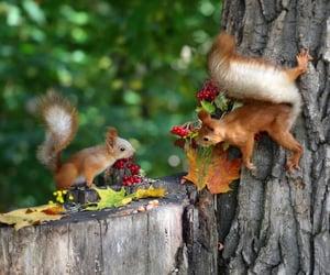 Animales, naturaleza, and ardillas image