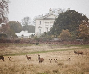 nature and deer image