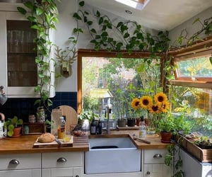 plants, flowers, and home image