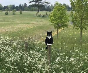 cat, kitty, and cottagecore image