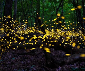 fireflies, forest, and light image