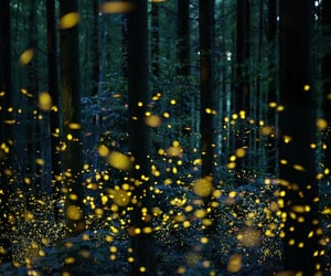 forest, light, and luminous image