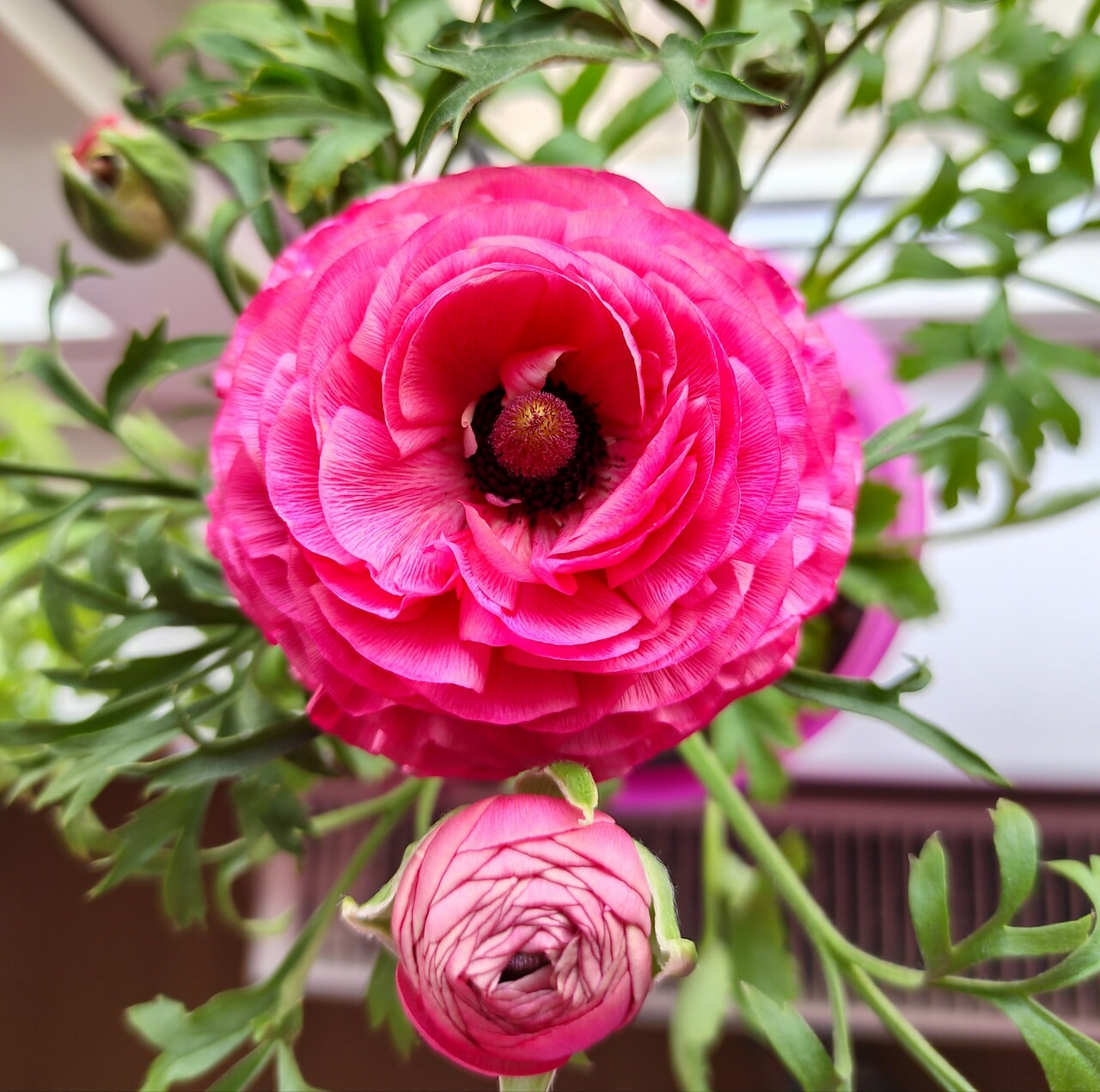 flowers, pink, and colour image