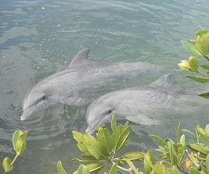 dolphin, animal, and nature image