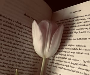 awesome, beauty, and book image