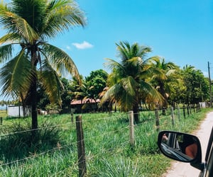beach, car, and coconut trees image