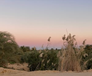 aesthetic, desert, and egypt image