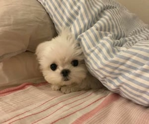 bed, puppy, and cute image