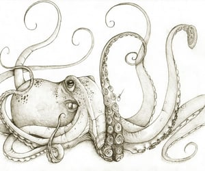 tattoo, octopus, and polvo image