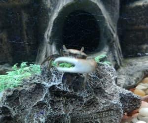 aquarium, my buddy, and aquatic image