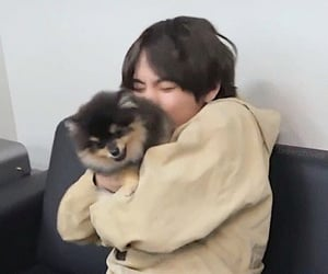 dog, jin, and rm image