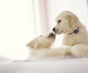 dog, adorable, and pets image