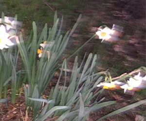 flowers, wilderness, and accidental image