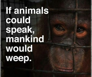 animals, weep, and words image