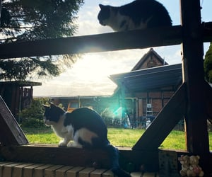 cat, cats, and cooper image