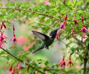 bird, animals, and flowers image