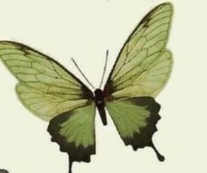 archive, butterfly, and header image