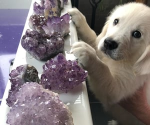 animals, crystals, and dogs image