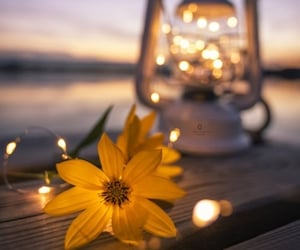 flowers, light, and lamp image