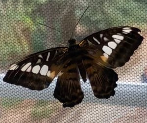 butterfly, zoo, and przyroda image