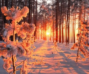snow, sunset, and winter image
