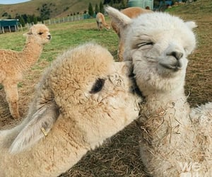 animal, alpaca, and aesthetic image