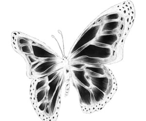 butterfly, archive, and aesthetic image