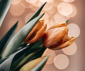 beautiful, bloggers, and flowers image