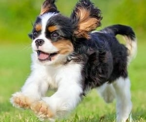 puppies, animals, and dogs image