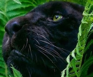 black panther, theme, and green image