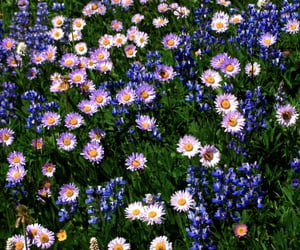 field, flores, and flowers image