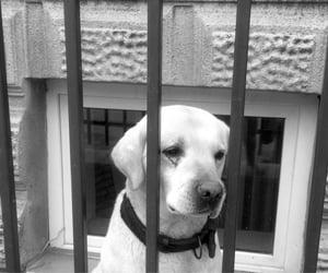 care, pet, and sad image