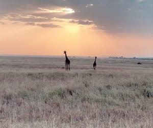 adventure, giraffe, and landscape image