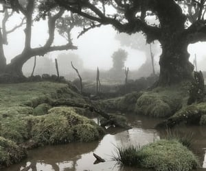 forest, nature, and aesthetic image