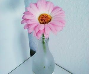 beauty, gerbera, and Цветы image