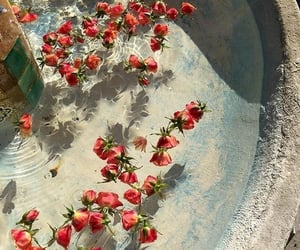 flowers, fountain, and red roses image