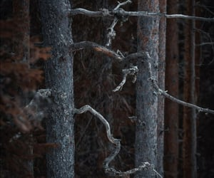 brown, finland, and forest image