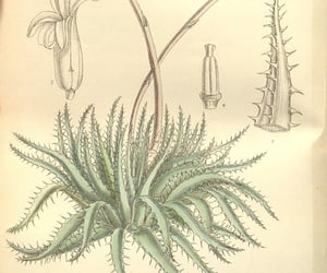 botany, artist:name=matilda smith, and artist:viaf=48272868 image