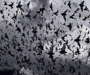 bats, bat, and black and white image