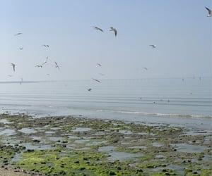 birds, sea, and cottagecore image