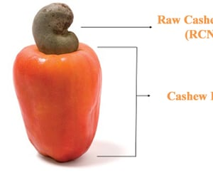 article, cashew, and cashew nuts image