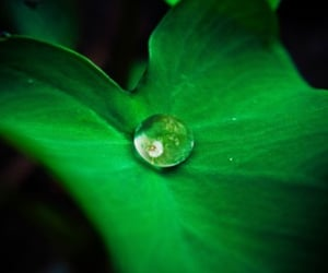 green, water, and nature image