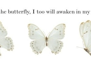 butterfly, quote, and vintage image