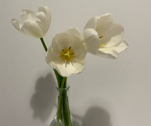 flowers, simplicity, and tulips image