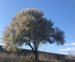 albero, flowers, and grass image