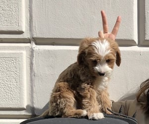 dog, beige, and cute image