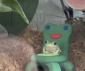 frog, cute, and animal crossing image