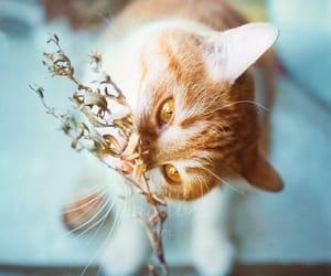 cat, rustic, and cute image
