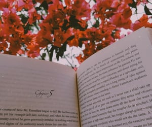 flowers, books, and photography image