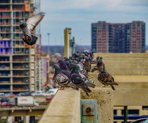 birds, Dallas, and street image